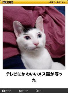 テレビにかわいいメス猫が写った