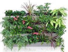 Een uniek systeem dat is ontworpen voor verticale tuinen en groene muren. U kunt naar wens de units apart plaatsen op een horizontaal oppervlak of een rek personaliseren of gebruik maken van het wand-ophangsysteem om een verticale tuin te creëren. Voor meer info zie de website van Pals Kunsthagen