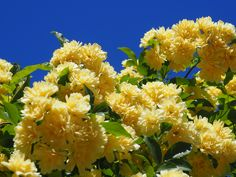 #blüte#fioritura #meranerland #meranoedintorni #südtirol #altoadige #vistilana