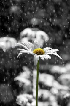 rain photography This type of photo is color. It f - photography Sonne Illustration, I Love Rain, Rain Photography, Focal Point Photography, Photography Flowers, Color Photography, Spring Photography, Singing In The Rain, Jolie Photo