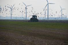 Het land wordt bewerkt, windmolenpark onder Oosterbierum. Februari 2016.
