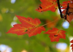 Find out why leaves are turning red, orange & yellow!