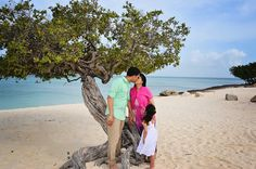 A kiss by the famous Divi Tree in Aruba while child watches her parents in love.