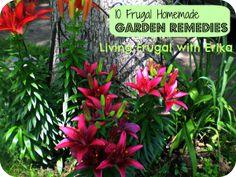 10 Frugal Homemade Garden Remedies!
