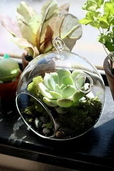 DIY Succulent Terrarium - Project Wedding