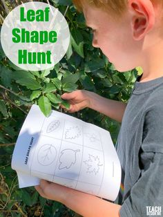 Leaf shape hunt for kids / nature study / summer nature / trees / leaves / Nature Activities, Science Activities For Kids, Preschool Activities, Stem Projects, Science Projects, Preschool At Home, Forest School, Nature Study, Creative Teaching