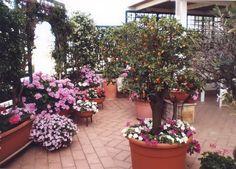 terrazze fiorite - Cerca con Google   Terrazze Fiorite -Photo ...