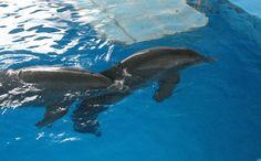 Impressive Clearwater Marine Aquarium America Travel Tips « Travel Blor