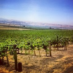 Vineyards pic from Darcie Kent Vineyards in Livermore Ca