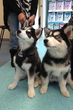 Sisters first visit to the vet. - Imgur