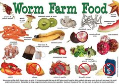 Worms, Worm farm and All products on Pinterest