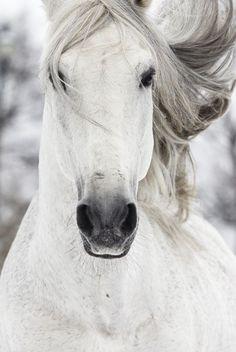 #Animals - #Horse - #Horses Forgotten Nobility