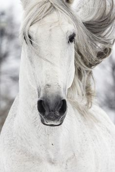 Ride your own white horse -  create your own path - they don't wait for a prince - they ride their own white horse.