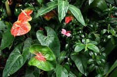 Tropical Plants and Flowers - Want to be able to indentify plants with your mobile phone? Check out GardenAnswers.com! Plant Identification, Tropical Plants, Phone, Garden, Flowers, Check, Telephone, Garten, Lawn And Garden