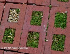 The living sidewalk in front of the garden is paved in recycled bricks turned on their sides, filled with gravelly soil, and planted with tiny sedum.