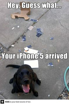 Hey, guess what?!?  Your iPhone 5 arrived!