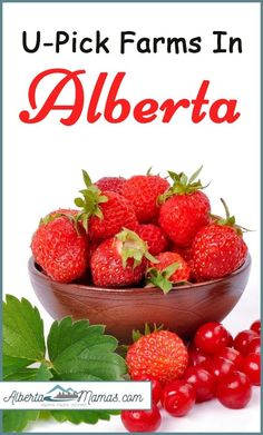 A guide to the U-Pick Farms located throughout Alberta O Canada, Alberta Canada, Canada Travel, Newfoundland Tourism, Alberta Travel, Road Trip Food, Berry Picking, Travel Oklahoma, Canadian Rockies