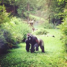 Knoxville Zoo in Knoxville, TN