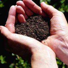 El suelo tiene dos funciones para las plantas, es su anclaje y el que le brinda los nutrientes que éstas necesitan. Para poder desarrollarse, las plantas necesitan un suelo fértil que sea rico en materia orgánica. Cuando el suelo no es el adecuado, la planta ve limitado su crecimiento.