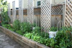 Trellis for vertical gardening. Nice use of space by using a long bed among the property line.