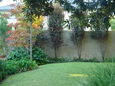 Probing for the most wanted landscaping ideas for your domicile? Then, Gardendeva have the best collection of landscaping ideas for you. Call us now! Crazy Paving, Plant Nursery, Blue Pearl, Fire, Landscape, Landscaping Ideas, Gallery, Plants, Collection