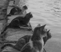 «animals» pictures on Favim.com » page 2. Beautiful cats. I wonder what they are looking at. So curious. The Incensewoman