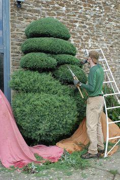In progress (cloud pruned cupressus)