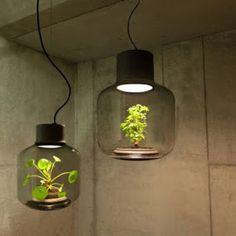 Растение-лампа, не требующее никакого ухода за собой  Студия We Love Eames разработала светильники, в которых живут растения, растущие в любой среде и не требующие человеческого ухода. Хотя концепция похожа на террариум, все же это творение было разработано больше как светильник для безоконных помещениях, таких как подвальные помещения и офисы. Существуют стоячие и подвесные варианты. Экосистема растений является вполне самостоятельной и может расти в покое годами. Данное чудо создано…