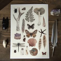 Natural History Collection giclee print A4 moths amethyst mushrooms curiosities by thefloralfoxart on Etsy https://www.etsy.com/dk-en/listing/503126988/natural-history-collection-giclee-print