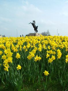 Horse Statue and Daffodils in Newmarket, Suffolk, England, home of horse racing