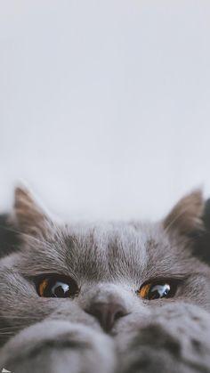 Funny Cat Wallpaper, Animal Wallpaper, Cute Cartoon Wallpapers, Cute Kawaii Animals, Super Cute Animals, Cute Little Animals, Baby Animals Pictures, Cute Animal Photos, Cute Baby Cats