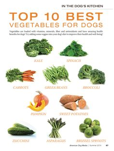 10 Best Foods for Dogs
