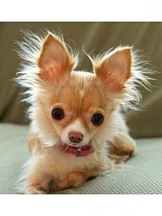 Love the ears !