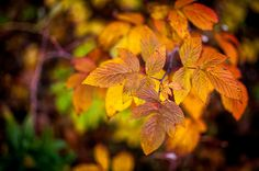 changing of the leaves http://www.flickr.com/photos/bretalistairf/10287894014/