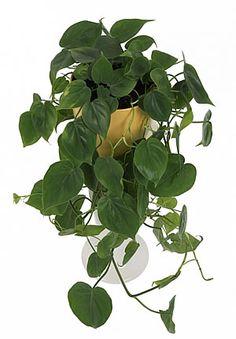 5 könnyen gondozható szobanövény