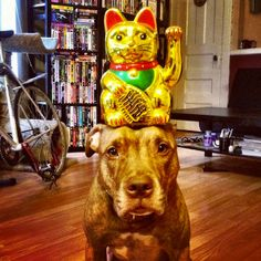 Meet Scout: The Adorable Dog That Can Balance Anything On His Head…Anything!