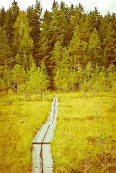 Finland when you have to walk through a swamp which can kind of swallow you into it there are some safe way to go over it. We call it pitkospuut. Trees on line.