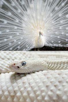 25 Rarely Seen All-White (Albino) Animals Captured by Photographers - TechEBlog