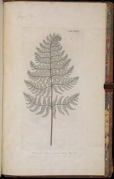 Symbolae botanicae, sive plantarum,.  Hauniae,imprensis auctoris, excudebant N. Möller et filius,1790-94..