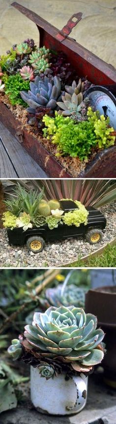 Succulent Container Garden Inspiration by TamidP