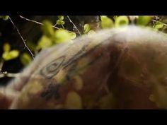les salamandres - YouTube