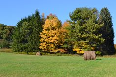 The Pennsylvania fall fields!