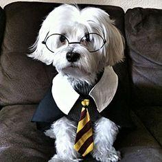 Halloween Pet Parade | Harry Potter | SouthernLiving.com