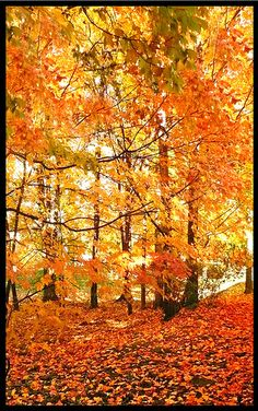When we were kids our family would take Sunday walks after church and inn the Fall the leaves would rustle under foot and the smell of the earth would rise up and put memories in our hearts that have lasted a lifetime!