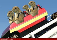 Prairie dogs pictures