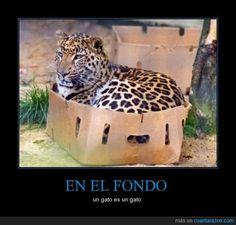 EN EL FONDO - un gato es un gato