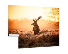 Red Deer in Morning Sun ©arturas kerdokas Deer Wall Art, Framed Wall Art, Morning Sun, Glass Wall Art, Fused Glass Art, Hunting Wallpaper, Water Deer, Hunting Themes, Reindeer Silhouette