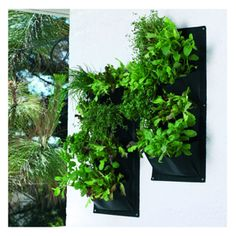 Herb and Salad Vertical Planters - Harrod Horticultural (UK)