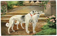 2 borzoi with ribbons Funny Dogs, Cute Dogs, Russian Wolfhound, Vintage Dog, Puppy Mills, Dog Dresses, Garden Statues, Illustration Artists, Beautiful Dogs