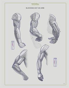 grey anatomy anatomy for students pdf